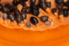 Семена папапайи которые близко сфотографированы стоковое изображение