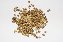 Семена пеньки на белой предпосылке Стоковое Изображение RF