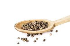 Семена пеньки на деревянной ложке Стоковые Фото