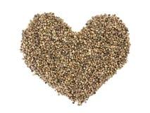 Семена пеньки Стоковое Фото