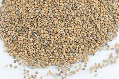 Семена пеньки Стоковая Фотография RF