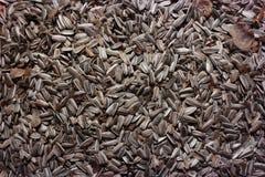 Семена подсолнуха, еда птицы на зиме, семена масличной культуры Стоковое Фото