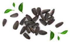 Семена подсолнуха украшенные при зеленые листья изолированные на белой предпосылке Взгляд сверху Стоковое Изображение RF
