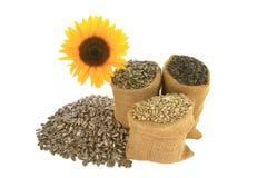 Семена подсолнуха в сумках мешковины и spiled перед sunfloer Стоковые Изображения RF