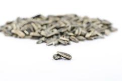 Семена подсолнуха изолированные на белизне Стоковое фото RF