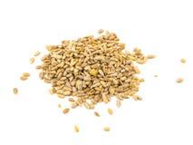 Семена подсолнуха изолированные на белой предпосылке Стоковая Фотография RF