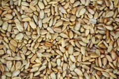 Семена подсолнуха, конец вверх по взгляду Стоковая Фотография