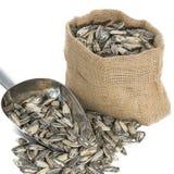 Семена подсолнуха с измеряя ветроуловителем Стоковые Изображения RF