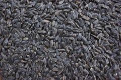 Семена подсолнуха Стоковая Фотография RF