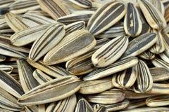 Семена подсолнуха стоковые изображения rf