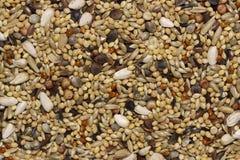 семена птицы Стоковые Изображения RF