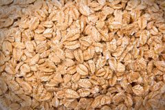 Семена пшеницы стоковые изображения rf