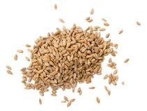 Семена пшеницы Стоковые Фото