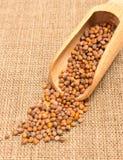 Семена редиски на холсте Стоковое Изображение