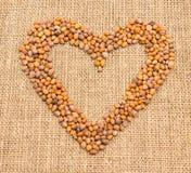 Семена редиски на холсте Стоковая Фотография