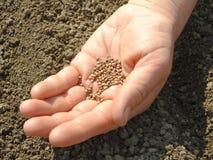 семена руки стоковые изображения