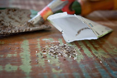 Семена салата Стоковая Фотография