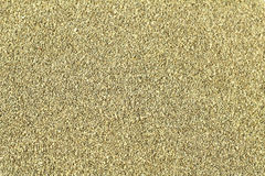 семена сельдерея Стоковые Фотографии RF