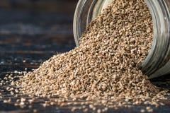 Семена сельдерея Стоковое Фото
