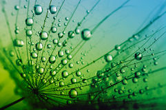Семена с падениями Стоковые Фотографии RF