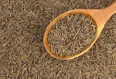 Семена тимона в деревянной ложке стоковые изображения rf