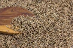 Семена тимона в деревянной ложке стоковое фото rf