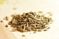 семена тимона Стоковые Фотографии RF