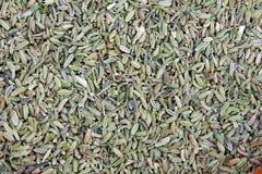 семена тимона Стоковая Фотография RF