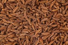 Семена тмина стоковая фотография rf