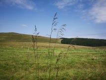 Семена травы Стоковые Изображения