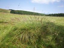 Семена травы Стоковые Изображения RF