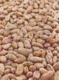 Семена фасоли почки Стоковое Фото