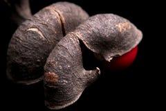семена фасоли удачливейшие стоковая фотография