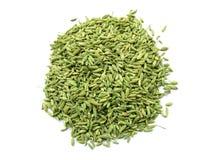 семена фенхеля Стоковые Фотографии RF