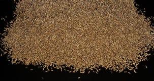 Семена фенхеля, vulgare фенхеля падая против черной предпосылки, замедленного движения видеоматериал