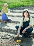 Семена хавроний женщин в почве стоковая фотография