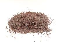 семена черного мустарда Стоковые Фото