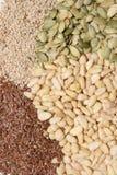 семена Стоковые Фотографии RF