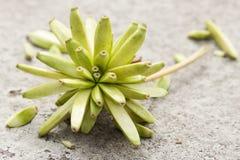 Семена Стоковые Фото