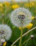 Семена Стоковое Изображение RF