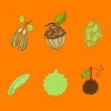Семена Стоковое Фото
