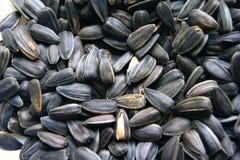 Семена Стоковые Изображения RF