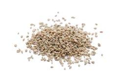 семена ajwain Стоковое Фото