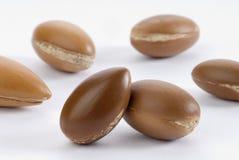 семена argan Стоковое фото RF
