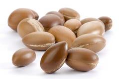 семена argan Стоковое Изображение