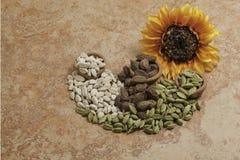 семена cardamom Стоковое Изображение