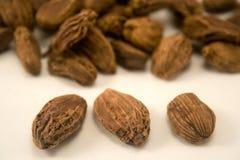 Семена Cardamom   Стоковые Изображения
