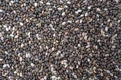 Семена Chia Стоковые Фото