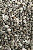 Семена Chia Стоковое фото RF