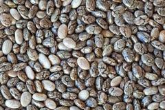 Семена Chia Стоковые Фотографии RF